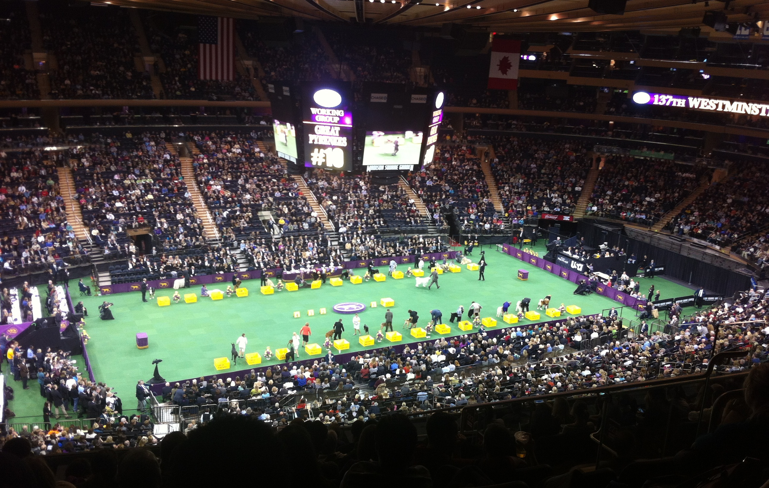 Westminster Dog Show In Madison Square Garden Garden Ftempo