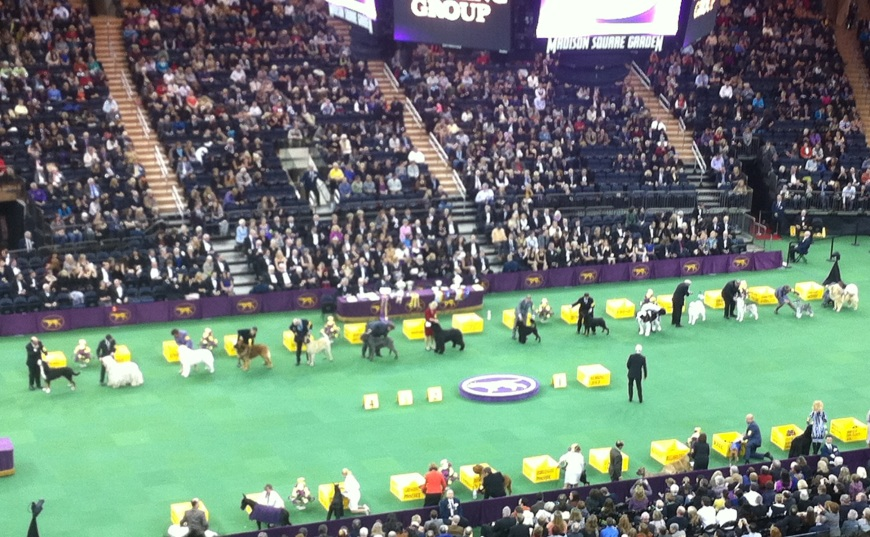 Finalists in the Working Dog category