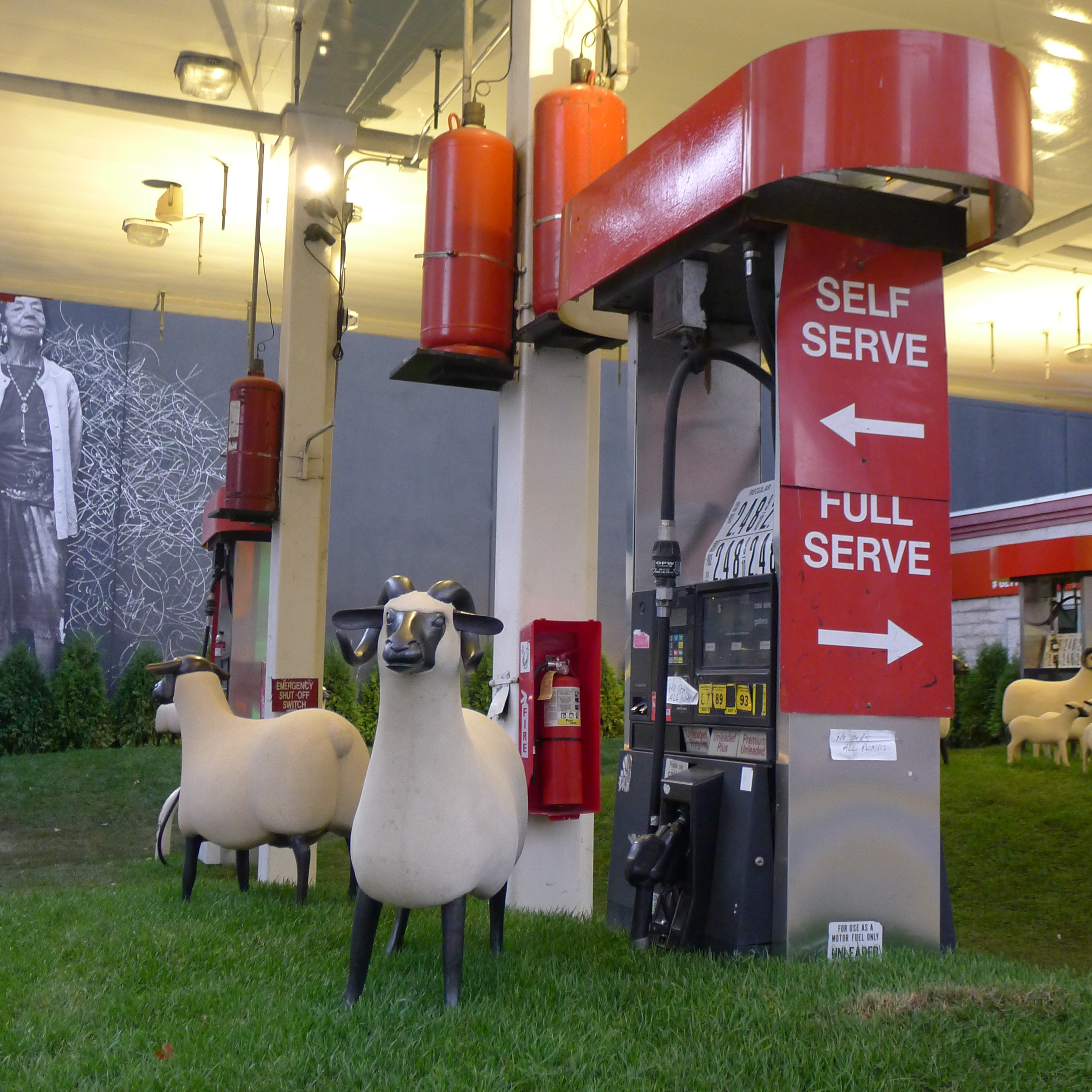 Sheep Station
